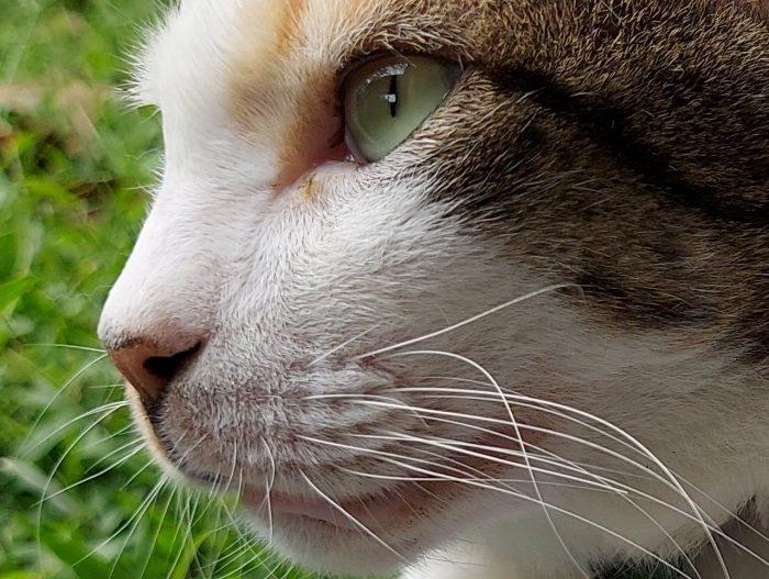 Review Samsung Galaxy M51 Kamera Belakang Kucing Auto Crop