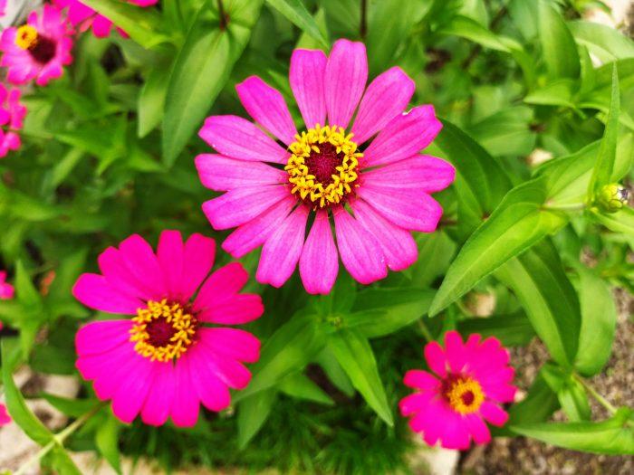 POCO M3 Kamera Belakang Bunga