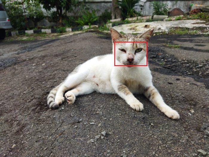 POCO M3 Kamera Belakang Kucing 64MP