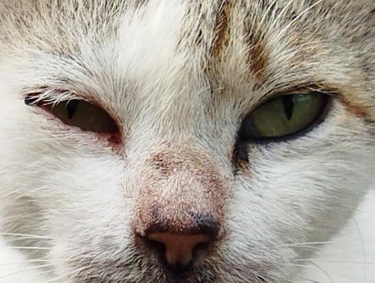 POCO M3 Kamera Belakang Kucing 64MP Crop