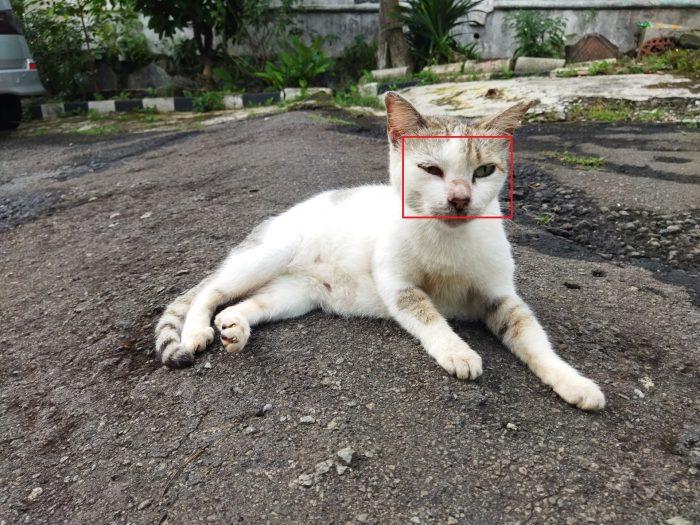 POCO M3 Kamera Belakang Kucing Auto