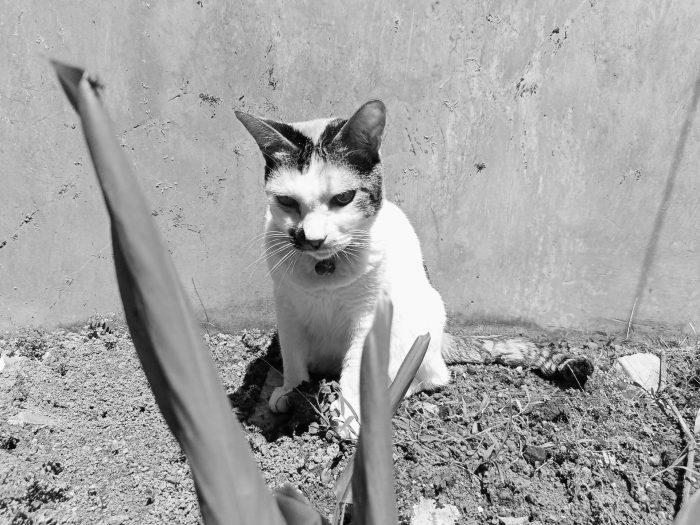 realme C25 Kamera Belakang Kucing BW