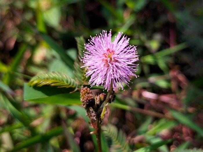 OPPOA74-Flower-Macro