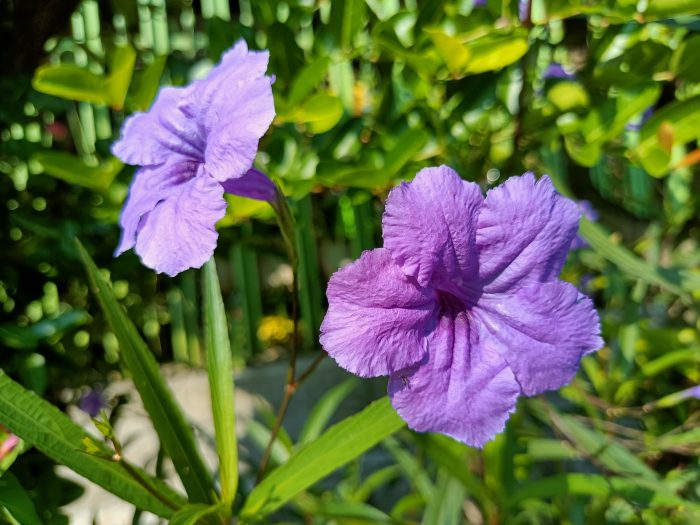 realme 8 5G Kamera Belakang Bunga