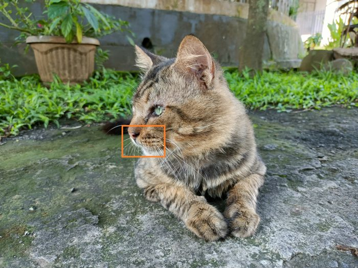 realme 8 5G Kamera Belakang Kucing Auto
