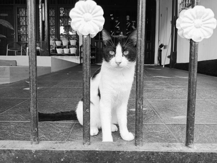 realme 8 5G Kamera Belakang Kucing B&W