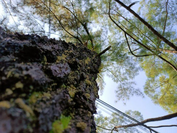 realme 8 5G Kamera Belakang Pohon
