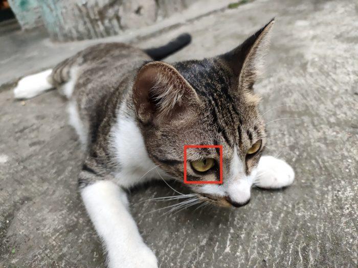 OPPO-Reno6-16MP-Target-Cat
