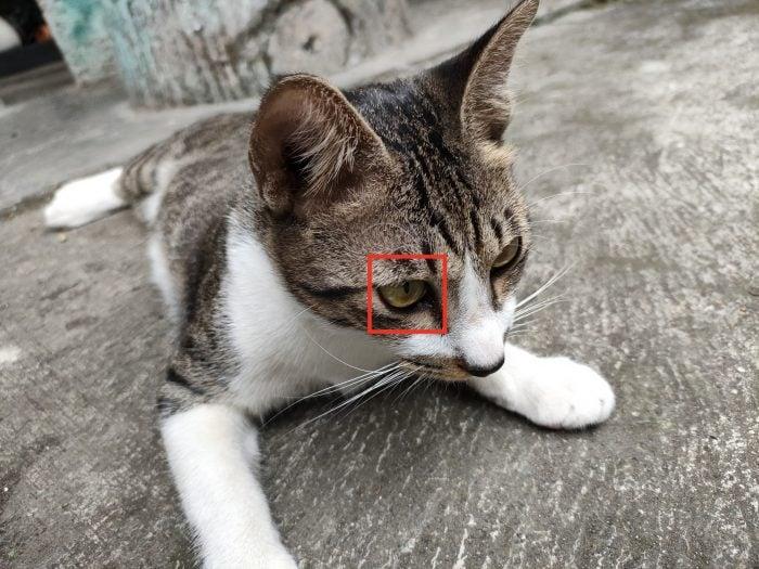 OPPO-Reno6-64MP-Target-Cat