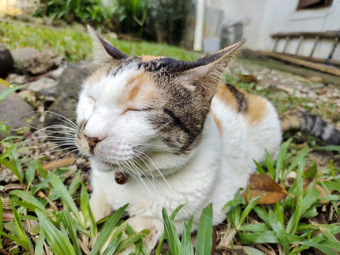 vivo V21 Kamera Belakang Kucing