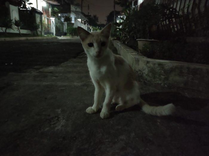 vivo V21 Kamera Belakang Malam Kucing Auto