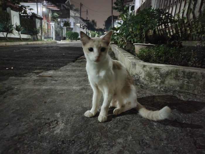 vivo V21 Kamera Belakang Malam Kucing Nightmode